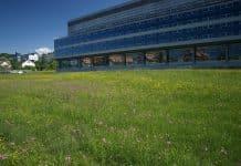 Bunte Wiesen (hier bei Empa, der eidgenössischen Materialprüfungs- und Forschungsanstalt) bieten Insekten Schutz und Nahrung. Bild: Sven Schulz